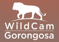 WildCam Gorongosa